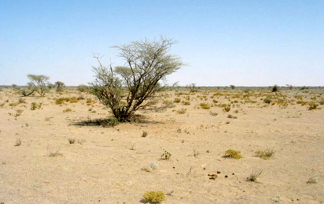Oman vegetation